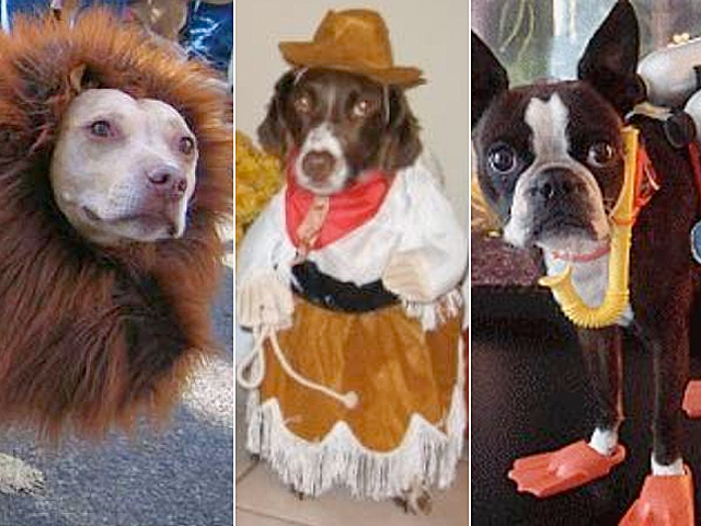 & Cutest Halloween Pet Costumes Ever: Dog Edition